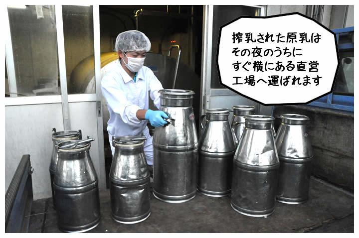 搾乳された原乳はその夜のうちにすぐ横にある直営工場へ運ばれます