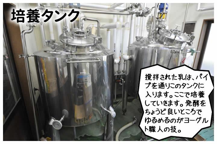 撹拌された乳は、パイプを通りこのタンクに入ります。ここで培養していきます。発酵をちょうど良いところでゆるめるのがヨーグルト職人の技。